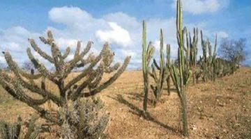 Comissão da Câmara aprova projeto de Lídice em defesa da caatinga