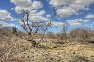 Tramita na Câmara projeto de Lídice que prioriza recursos para caatinga