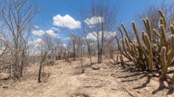 Deputados socialistas chamam a atenção para a importância do bioma caatinga