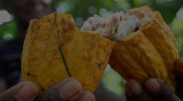 Retrospectiva 2019 – Em defesa do cacau e do chocolate